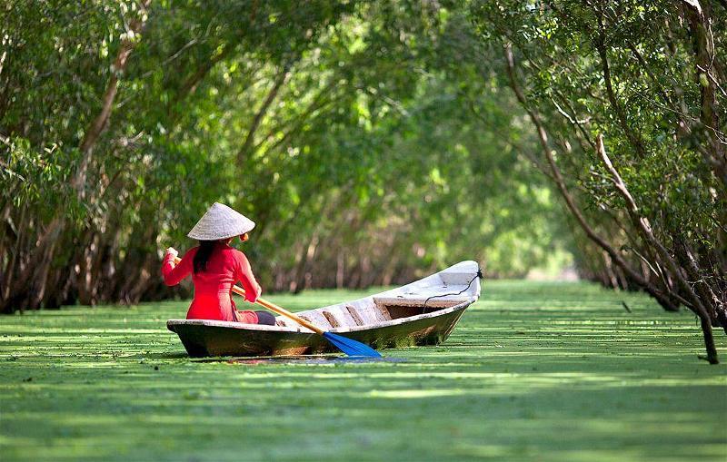 cây tràm- thiếu nữ chèo thuyền