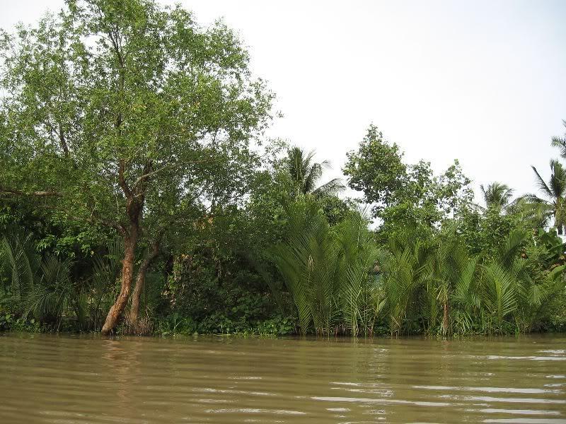 cây bần- Dừa nước